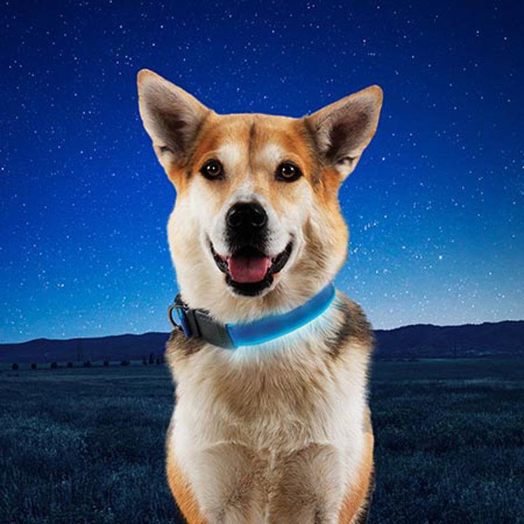 Mynd Nite Ize Nite Dog LED hundaól endurhlaðanleg blá